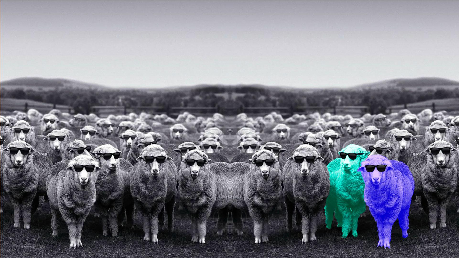 Edgee agence événementielle évènements Paris -visuel-home-moutons-lunette-fluo Edgee-Accueil des événements Supersolidaroécoloptimistic'